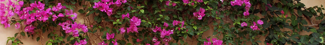 bouganvillia door_edited-1-pghdr